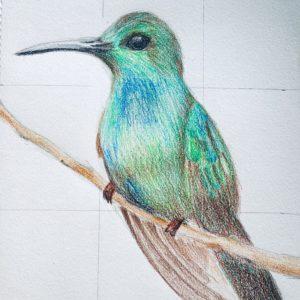 Imparare a disegnare un uccellino in inglese